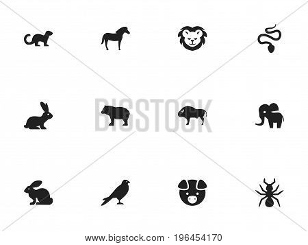 Set Of 12 Editable Zoo Icons. Includes Symbols Such As Panda, Wildcat, Bunny
