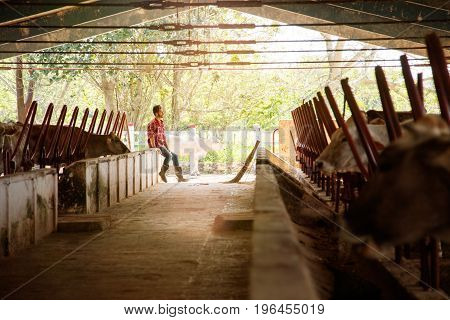 Man Cleaning Stables In Farm Farmer Relaxing On Wall