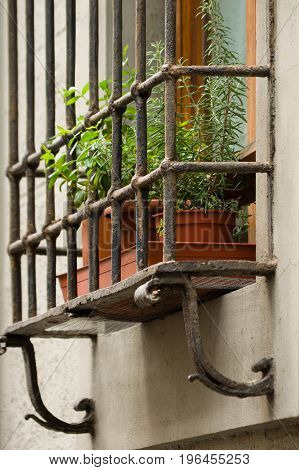 Plants In Flowerpots On Window Ledge Behind Ornate Iron Bars