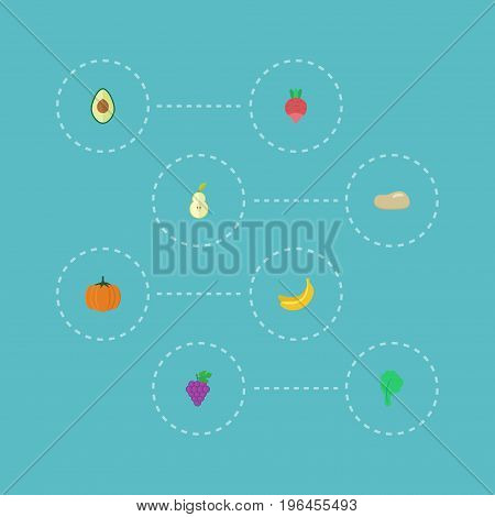 Flat Icons Duchess, Alligator Pear, Jungle Fruit And Other Vector Elements