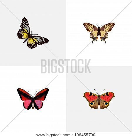 Realistic Tiger Swallowtail, American Painted Lady, Callicore Cynosura And Other Vector Elements