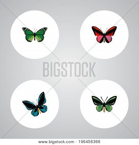 Realistic Callicore Cynosura, Birdwing, Demophoon And Other Vector Elements