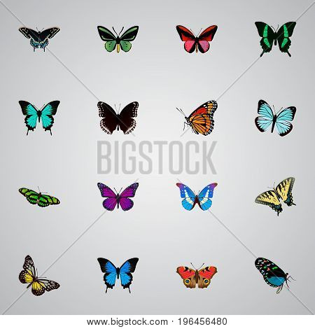Realistic Purple Monarch, Copper, American Painted Lady And Other Vector Elements