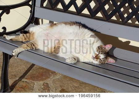 Lying down tabby cat on a bench
