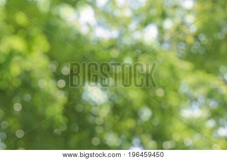 Green Defocused Abstract Background