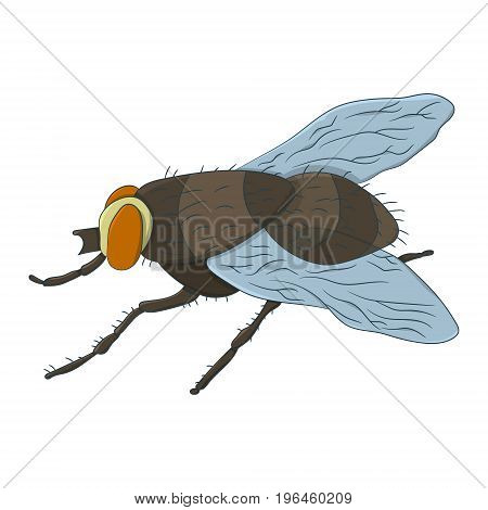 Colorful housefly. Musca Domestica. Vector illustration. Drawing by hand