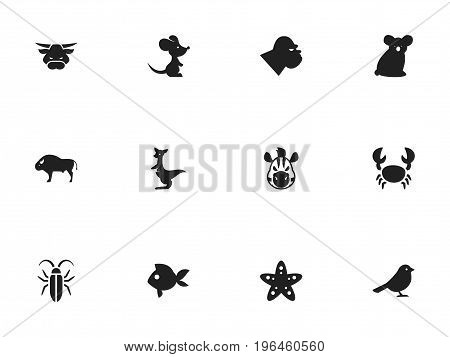 Set Of 12 Editable Animal Icons. Includes Symbols Such As Kangaroo, Horse, Bug And More