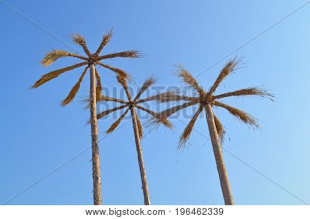 Umbrellas Of Reeds In The Form Of Palm Trees On The Beach