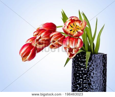 Bouquet of Red and Yellow Tulips in a grey vase. Tulips appear to be a little droopy