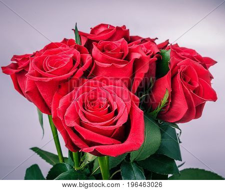 Bouquet of Red Roses with green leaves on a white background