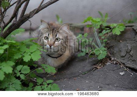 Cat outdoor bush asphalt cute facial expression