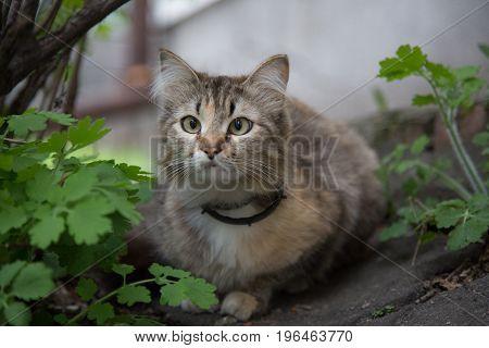 Beautiful grey cat portrait  closeup outdoor no people