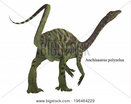 Anchisaurus Dinosaur Tail with Font 3d illustration - Anchisaurus was a omnivorous prosauropod dinosaur that lived in the Jurassic Periods of North America Europe and Africa.