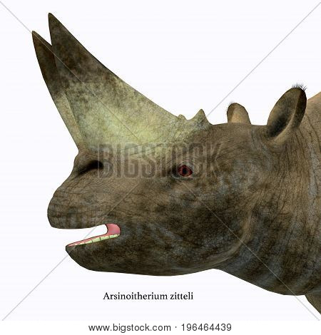 Arsinoitherium Mammal Head with Font 3d illustration - Arsinoitherium was a herbivorous rhinoceros-like mammal that lived in Africa in the Early Oligocene Period.