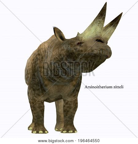 Arsinoitherium Mammal on White with Font 3d illustration - Arsinoitherium was a herbivorous rhinoceros-like mammal that lived in Africa in the Early Oligocene Period.