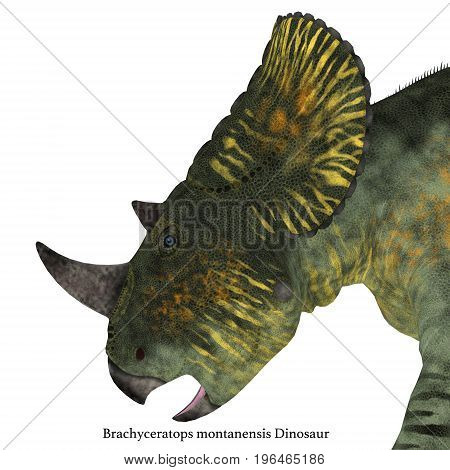 Brachyceratops Dinosaur Head with Font 3d illustration - Brachyceratops is a herbivorous Ceratopsian dinosaur that lived in Alberta Canada and Montana USA in the Cretaceous Period.