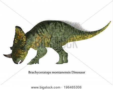 Brachyceratops Dinosaur Side Profile with Font 3d illustration - Brachyceratops is a herbivorous Ceratopsian dinosaur that lived in Alberta Canada and Montana USA in the Cretaceous Period.