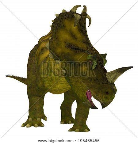 Centrosaurus Dinosaur Neck Frills 3d illustration - Centrosaurus is a herbivorous Ceratopsian dinosaur that lived in Canada in the Cretaceous Period.