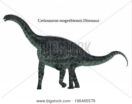 Cetiosaurus Dinosaur Side Profile with Font 3d illustration - Cetiosaurus was a herbivorous sauropod dinosaur that lived in Morocco Africa in the Jurassic Period.