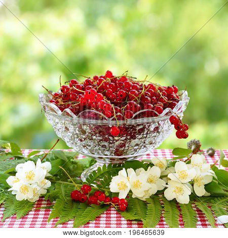 Red currant in a glass vase and jasmine flowers. Blurred green background.