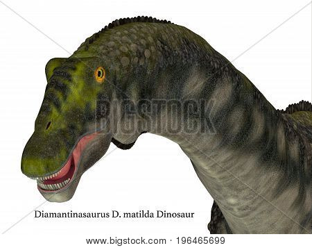 Diamantinasaurus Dinosaur Head with Font 3d illustration - Diamantinasaurus was a herbivorous sauropod dinosaur that lived in Australia during the Cretaceous Period.