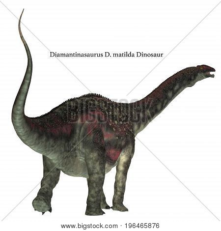 Diamantinasaurus Dinosaur Tail with Font 3d illustration - Diamantinasaurus was a herbivorous sauropod dinosaur that lived in Australia during the Cretaceous Period.