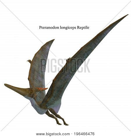Pteranodon Reptile Wings Up with Font 3d illustration - Pteranodon was a flying carnivorous reptile that lived in North America in the Cretaceous Period.