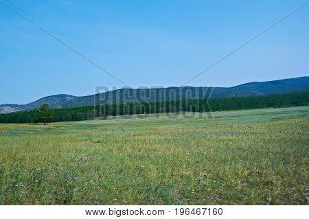 Vast Steppes Olkhon Island