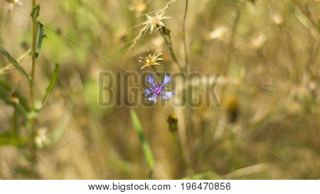 light blue flowers on field close up composition photograph