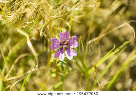 purple flowers on fields close up composition photograph
