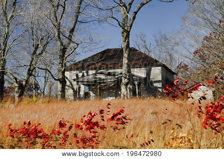 An abandoned house in the prairie with sumac