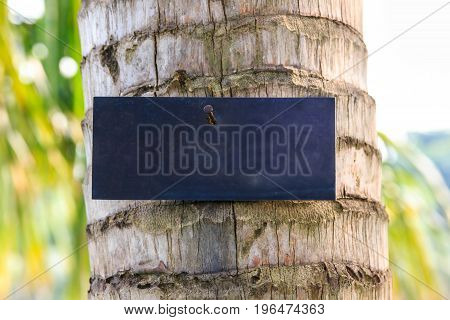 Sign blue on palm in garden for show details palm