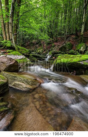 Powerful Creak With Cascade In Green Forest