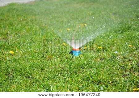 Lawn sprinkler spaying water over green grass with copy space. Irrigation system
