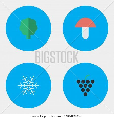 Elements Flake Of Snow, Wine, Fungus And Other Synonyms Forest, Snowflake And Fungus. Vector Illustration Set Of Simple Garden Icons.
