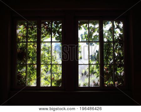 Window with Sunlight and Growing Green Weed in Backlight