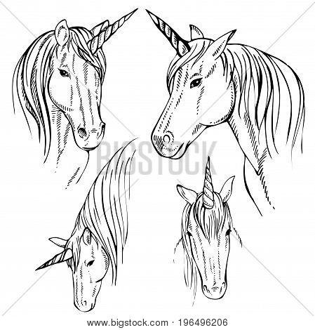 Sketch Unicorn, hand drawn ink illustration.Unicorn horse animal.White mythical horse head with long horn. Mythic symbol of fantasy hors