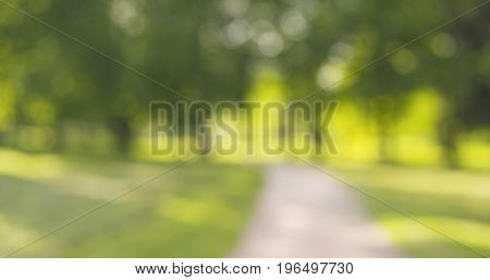 real lens blur of trees in sunny day, wide photo