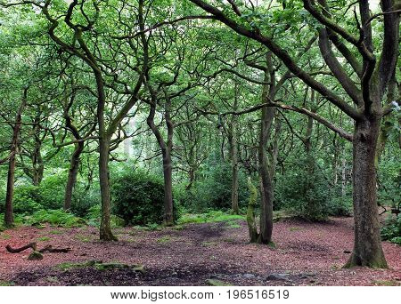 Clearing in an oak woodland forest with green summer trees path and fallen leaves and bushes