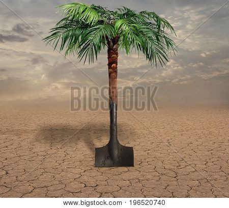 The palm tree grew out of a shovel in the desert.