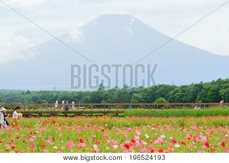 YAMANAKA, JAPAN - JULY 16, 2017 : Summer Poppy fields at Mount Fuji valley in Japan taken on July 16, 2017. Flower parks at the base of Mount Fuji are a major tourist attractions