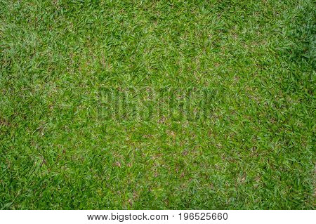 The Grass lawn green background idea design