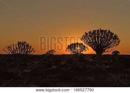 Silhouettes at sunset of quiver trees and rocks at the forest at Garas Park Rest Camp near Keetmanshoop on the B1-road to Mariental