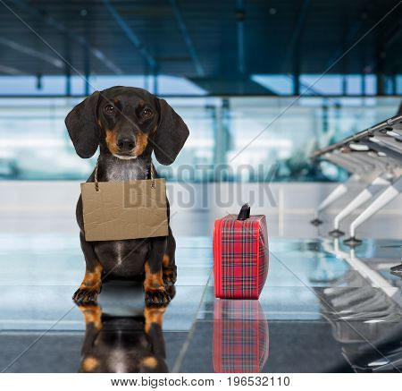 Dog In Airport Terminal On Vacation Ready For Transport In A Box