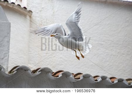 The seagull takes up from the roof of the house