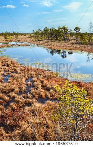 Beautiful waterscape in the swamp. Beautiful bog.