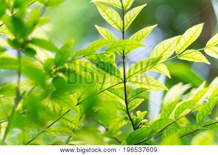green blurred of nature background or backdrop with color and bright sun light