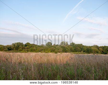 A Backdrop Summer Meadow Field In England Uk