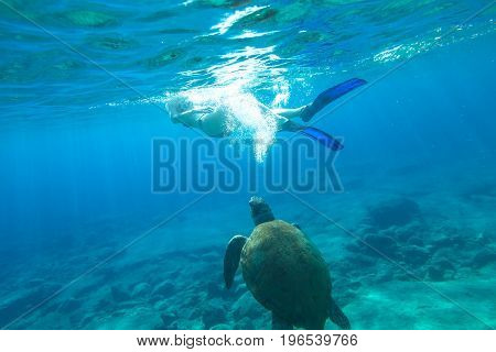 Woman bikini swims encountering sea turtle Caretta in crystal waters of Foneas Beach, Mani peninsula, Greece. Watersport activity. Summer holidays. Snorkeler female apnea with mask and fins enjoying.