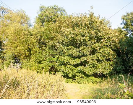 English Growth And Foliage In A Meadow In Summer